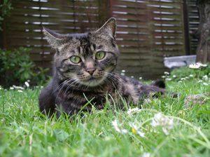Кот не может сходить в туалет по-маленькому: как помочь и причины