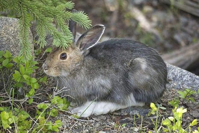 Где живет заяц в природе: что делает осенью, как готовится к зиме