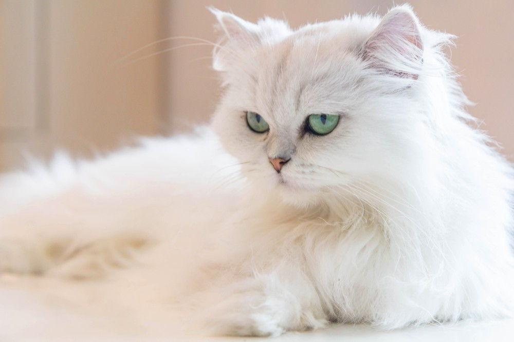 3 причины почему кот писает под себя - как лечить