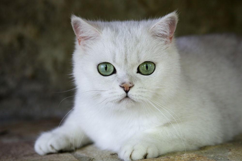 Кошка смотрит в зеркало - причины и что это значит