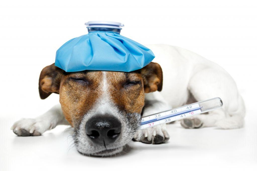 5 причин, почему собака какает с кровью: что делать, лечение, признаки