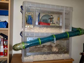 Как сделать клетку для хомяка своими руками в домашних условиях из подручных материалов