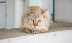 У кошки и кота текут слюни - что это