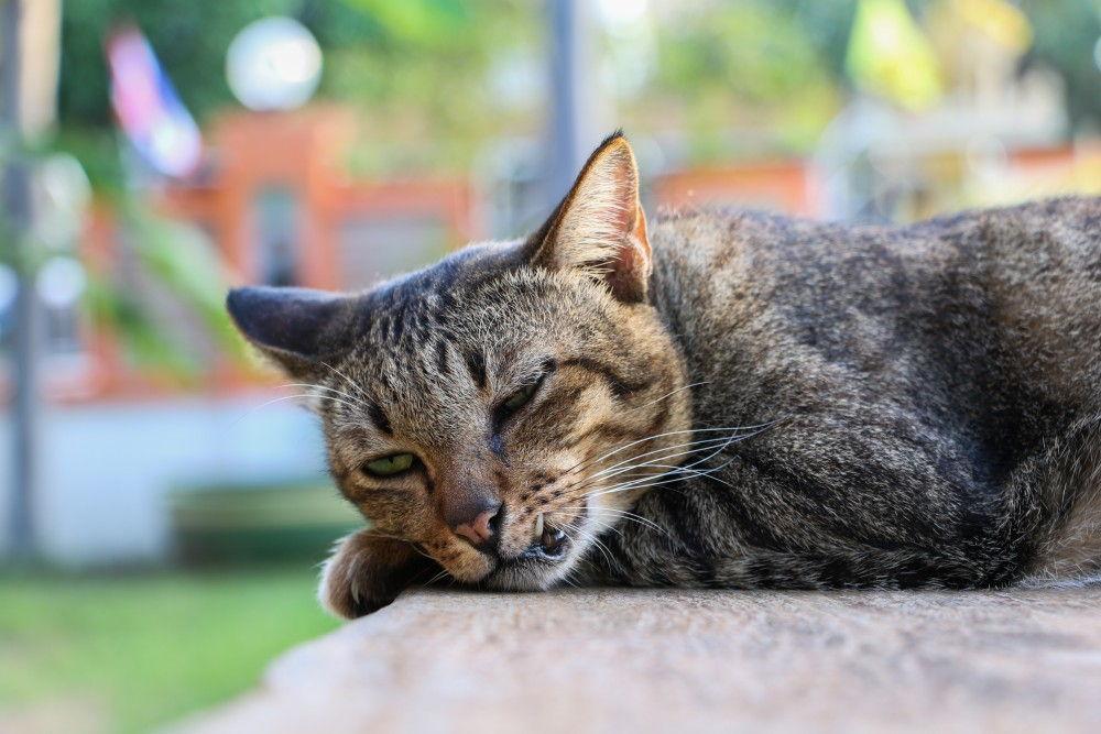 Картинка жизни кошек