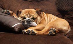 9 успокоительных средств для собак: мелких и средних пород, капли, уколы
