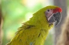 Некоторые особенности выбора лучшего попугая для вашего дома