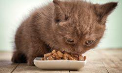 Корм для кошек при мочекаменной болезни