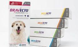Бравекто для собак от блох и клещей: инструкция по применению и дозировка, побочные действия и аналоги