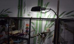 Лампа для попугая: как выбрать и правильно использовать
