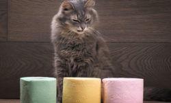 Понос у котенка, кошки: Что делать? [Руководство к действию]