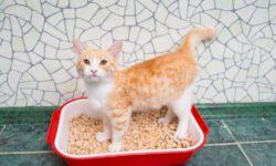 4 причины почему котенок перестал ходить в лоток