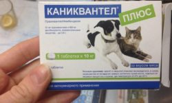 Каниквантел плюс для собак: инструкция по применению и аналоги