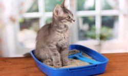 Кошка долго сидит в лотке по маленькому
