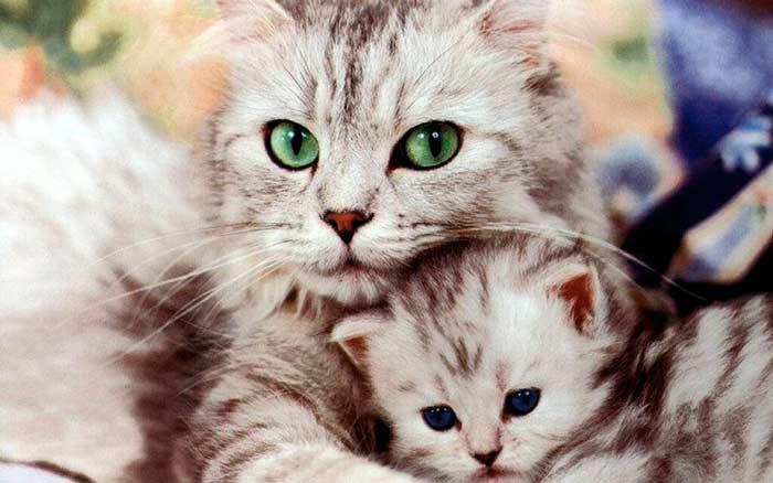 Когда можно разлучить котенка с кошкой: что надо знать