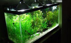 Какой лучше подобрать аквариум: как правильно выбрать хороший резервуар для начинающих