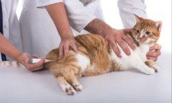 Температура у котенка - какой она должна быть