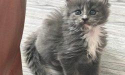 9 причин, почему у котенка пахнет изо рта