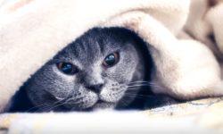 Как успокоить кота ночью - успокоительные средства