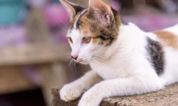 Клички для котов мальчиков - популярные и красивые