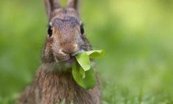 Кролики разведение и содержание в домашних условиях в клетке: инструкция для начинающих