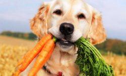 Чем кормить собаку: особенности питания и рациона питомца