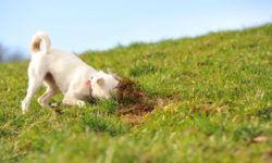 Собака ест землю и камни: почему, что делать, чего не хватает