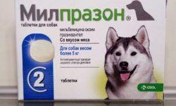 Милпразон для собак: инструкция по применению, дозировка и противопоказания, аналоги лекарства