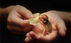 Новорожденные хомяки: как правильно ухаживать и заботиться о малышах, рост и развитие