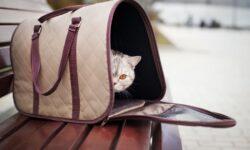 Переноска для кошек своими руками: как сделать сумку для кота самостоятельно?