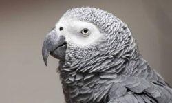 Какие попугаи самые умные и сообразительные в мире