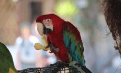 Стоит ли включать белый хлеб в рацион попугая