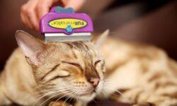 Фурминатор для кошек: что это такое, как им пользоваться, какой выбрать?