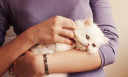 Как правильно держать кота на руках и брать животное, чтобы не причинить неудобств?