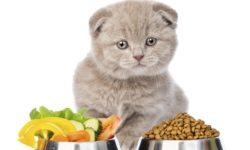 Сколько должен весить котенок в 3 месяца