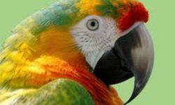 Попугай дома: плюсы и минусы его приобретения и содержания