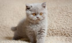 Русские имена и кличи для котов