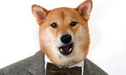 Клички для собаки мальчика: как назвать кобеля, а также лучший список популярных легких, красивых, русских, японских и прикольных имен со значением