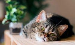 Когда вашей кошке нужен таурин: где содержится и добавки