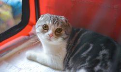 Выделения у кошки - 8 видов и причины появления