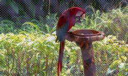 Выбираем лучшие кормушки для попугаев в клетку