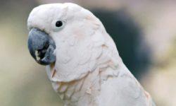 Самые дорогие попугаи в мире: ТОП-7 уникальных видов