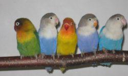 Как назвать попугая | Имена для вашего пернатого питомца