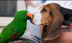 Как уживаются попугаи с собаками в одном доме