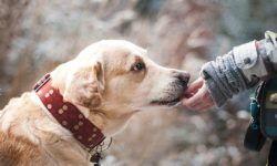 Дирофиляриоз у собак: симптомы и лечение, форма заболевания и диагностирование, профилактика