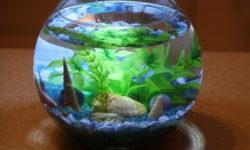 Аквариум на 20 литров: организация пространства, растения и виды рыбок для маленького сосуда