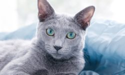 5 причин почему кошка не ласковая - как сделать ласковее