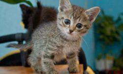 Рахит у котят: Как вылечить в домашних условиях + видео ветеринаров