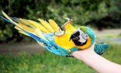 Транспортировка попугая правильно и безопасно | Как перевозить попугая без последствий