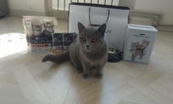 Корм для котят PURINA PRO PLAN KITTEN
