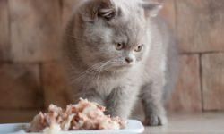 Чем кормить стерилизованную кошку и как часто